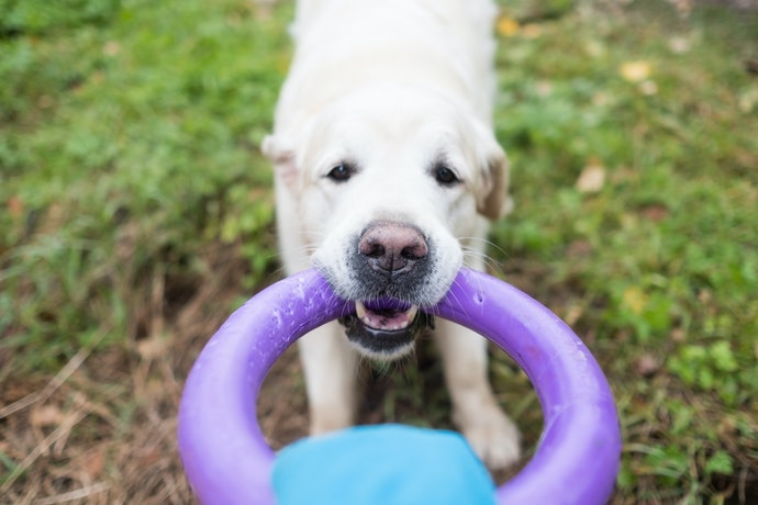 Top 10 Best Teether For Dog To Buy In 2020